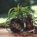 medicamento a base de cannabis pelo SUS